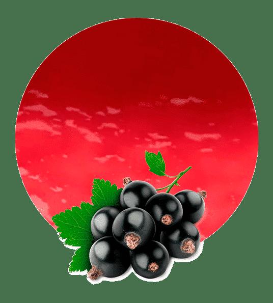 Pulpa de Grosella Negra